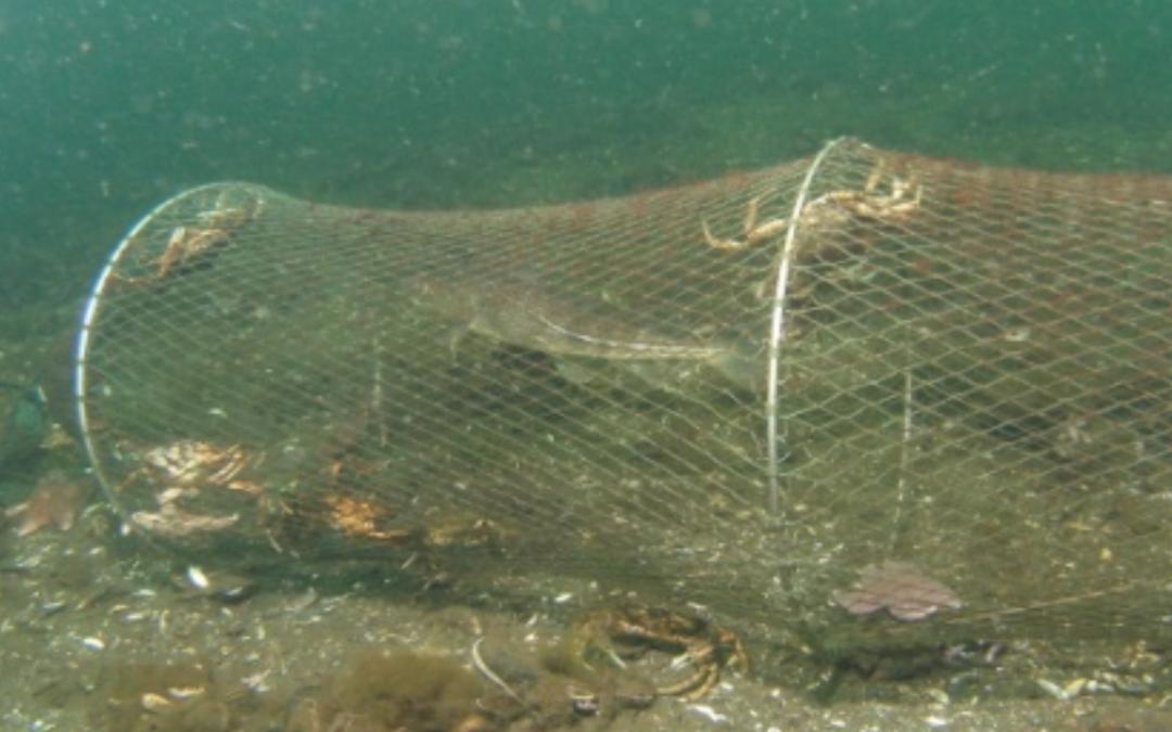 Künstliche Riffe als Ziel der Fischerei