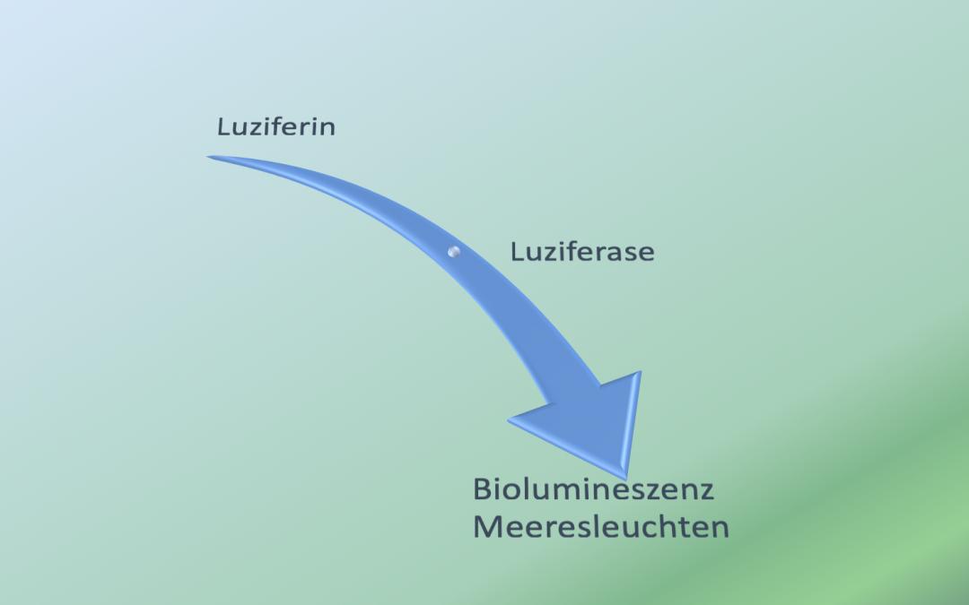 Meeresleuchten Biolumineszenz Jan Langmaack