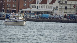 Schweinswale in der Flensburger Förde Jan Langmaack